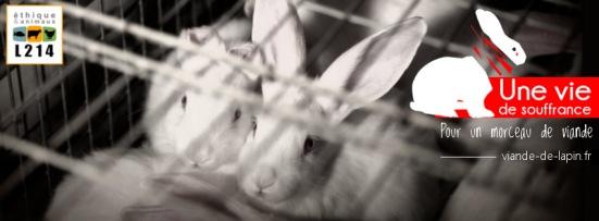 banniere-FB-lapins-vie-de-souffrance